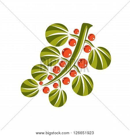 Single simple green vector leaf with orange seeds stylized nature element. Ecology symbol can be used in graphic design. Deciduous tree leaf.