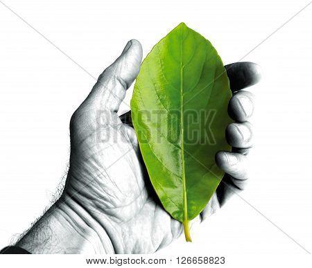 a green leaf in a black hand