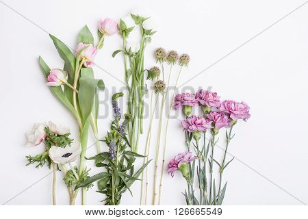 Bunch of pink tulips white anemones pink cloves and white buttercups lying on white background from the top prepered to do bouquet