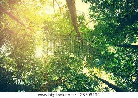 fresh green forest with sunlight prespective view