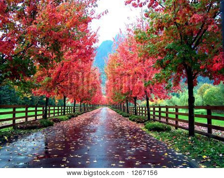 Tree-Lined Drive In Fall