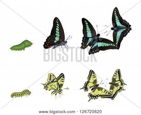 It is illustration of beautiful swallowtail butterflies