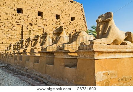 LUXOR EGYPT - OCTOBER 7 2014: The row of the Ram Headed Sphinxes guard the entrance to the Karnak Temple on October 7 in Luxor.