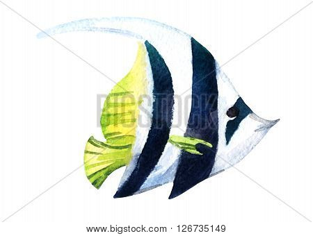 Exotic fish - tropical bannerfish isolated on white background. Watercolor raster illustration