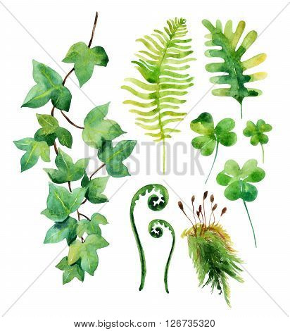 Watercolor wild leaves set isolated on white background. Woods leaves moss ivy branch and clover. Watercolor natural wildlife set. Hand painted forest elements illustration