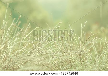 Delicate background with field plants in a soft light. Soft green. Blurred grass . Abstract eco green blurred background.
