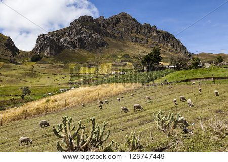 Farms and crops at the foot of hills of rock Zumbahua in the province of Cotopaxi Ecuador