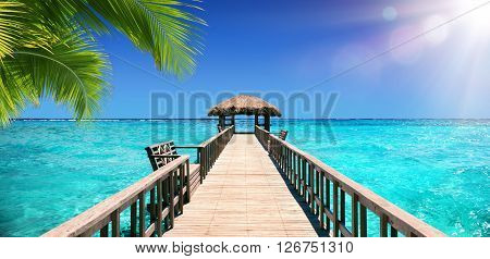 Input Dock For The Tropical Paradise with coconut palm