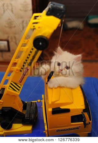 Look at the white kitten who plays with a toy crane