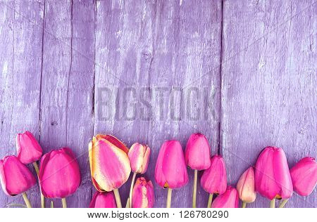 Frame Of Tulips On Rustic Wooden Background With Copy Space For Greeting Message. Spring Flowers. Sp