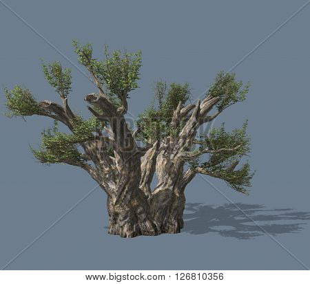 3D rendered illustration of a tree. Isolated on a homogeneous background