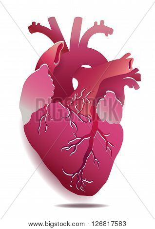 Vector Isolated Realistic Heart Illustration On White Background. Eps 10
