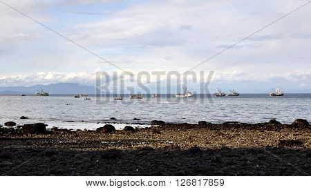 Boats fishing for herring in the ocean, with blue sky and mountains in the background, and the rocky shore in the foreground.