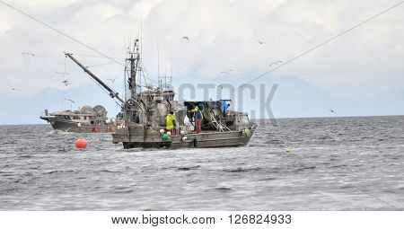 A fishing boat in the ocean fishing for herring.