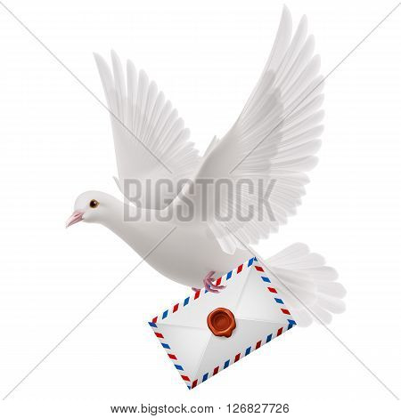 White pigeon fly with mail in beak