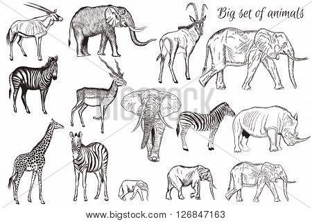 Mega collection or set of vector hand drawn detailed animals savanna theme giraffe zebra elephant antelope
