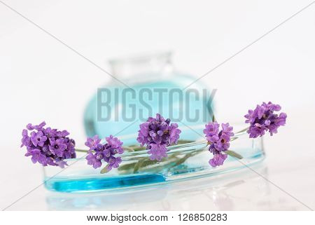 lavender botle of oil and lotion natural medicine