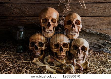 still life photography with five human skulls and animal bones in barn background vintage style