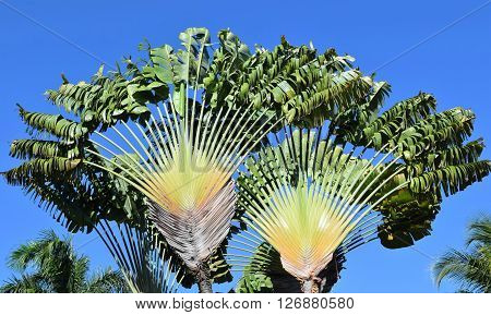Photograph of giant palm fronds against blue sky