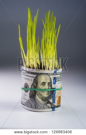Money growth: dollar bill and green grass. Financial concept.