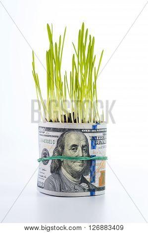 Dollar bill and green grass. Financial concept.
