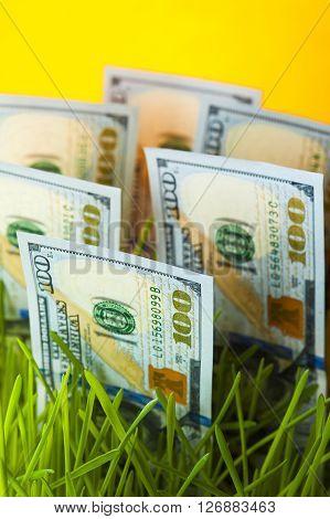 One hundred dollar bills in green grass. Money growth. Financial concept.