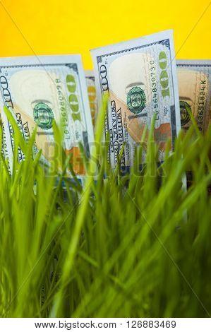 One hundred dollar bills among green grass. Money growth. Financial concept.