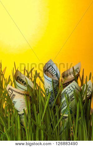 Dollar bills among green grass. Investment growth. Financial concept.