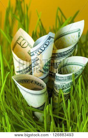 Dollar bills among green grass. Currency growth. Financial concept.