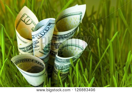 Dollar bills growing in green grass. Investment growth. Financial concept.