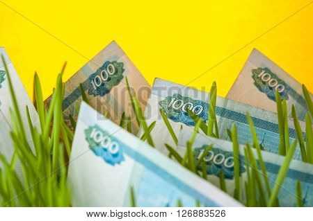 Money growth: ruble bills in green grass. Appreciation of russian ruble. Financial concept.