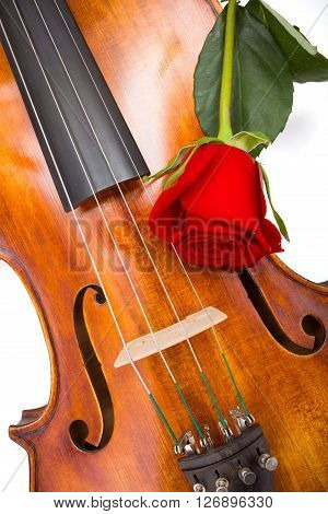Red Rose On Violin