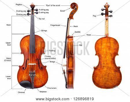 Anatomy Of A Violin (english)