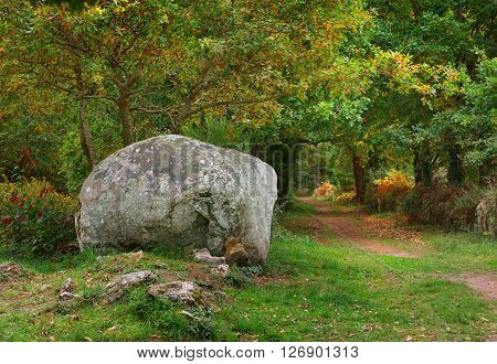 Ancient menhir granite stone in a deciduous oak forest in Carnac France