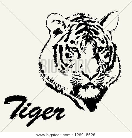 Tiger head hand drawn. Tiger sketch isolated background. Stylized haired inscription Tiger.