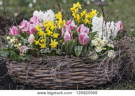 A basket with several sorts of spring flowers