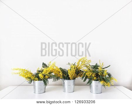 Bouquet of yellow mimosa in pail isolated on white background