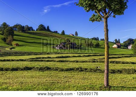 Appenzell hill landscape by beautiful day, Switzerland