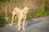 Feral hungry stray dog standing on the road poster