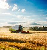 Working Harvesting Combine in the Field of Wheat. Farmland Background. Agriculture Concept. Toned and Filtered Photo with Copy Space. poster