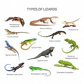 Lizards vector set in flat style design. Different kind of lizard reptile species icons collection. Isolated on white background. poster