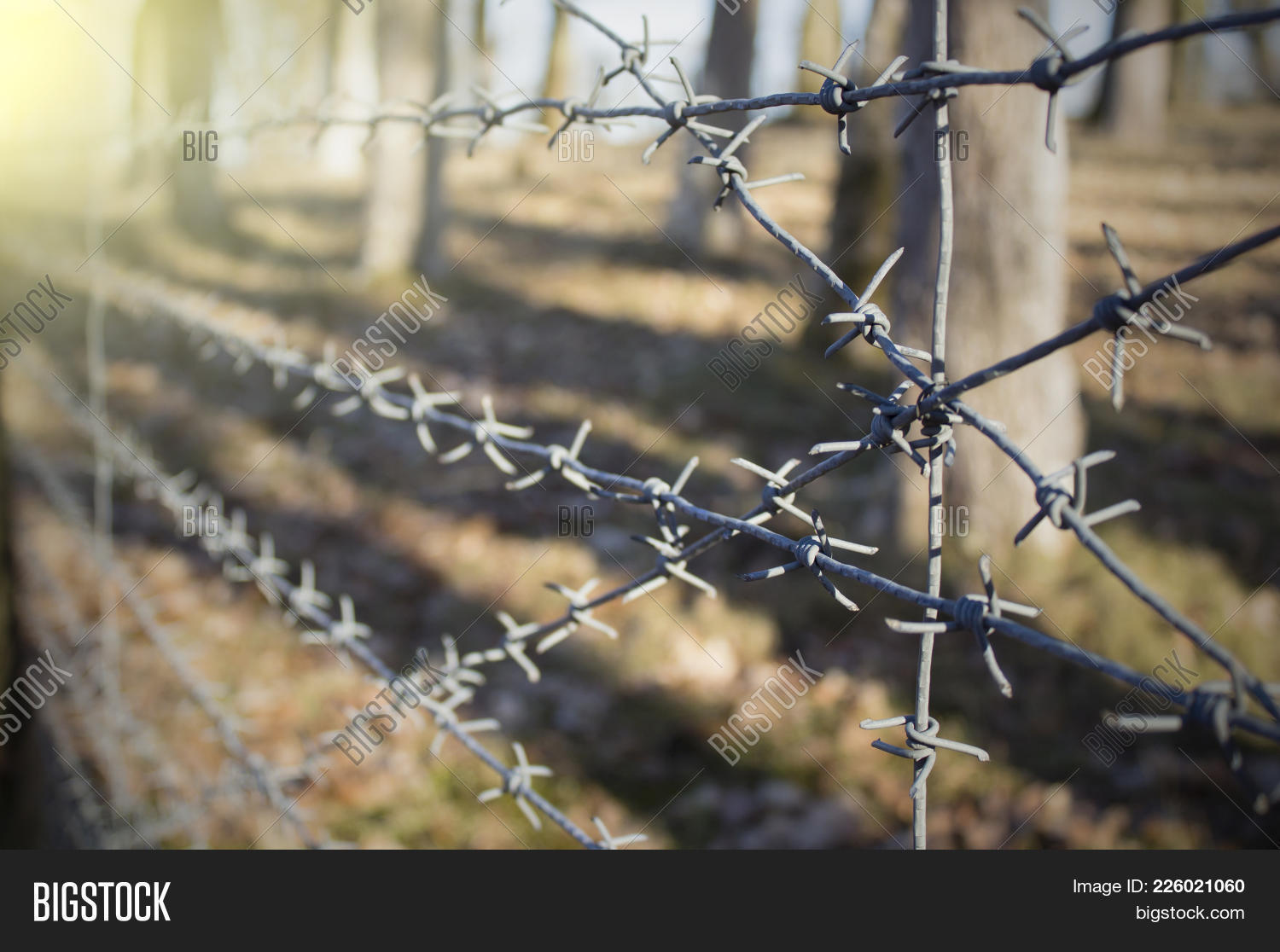 Barbed Wire Image & Photo (Free Trial)   Bigstock