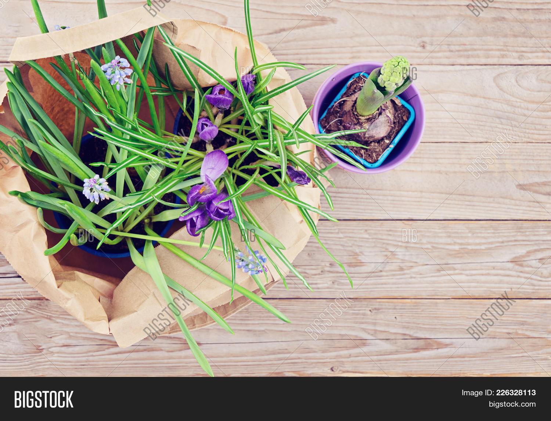 Spring sale concept image photo free trial bigstock spring sale concept springtime potted natural spring flowers hyacinthus crocus muscari mightylinksfo