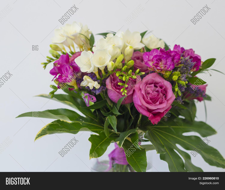 Close Pink Rose White Image Photo Free Trial Bigstock