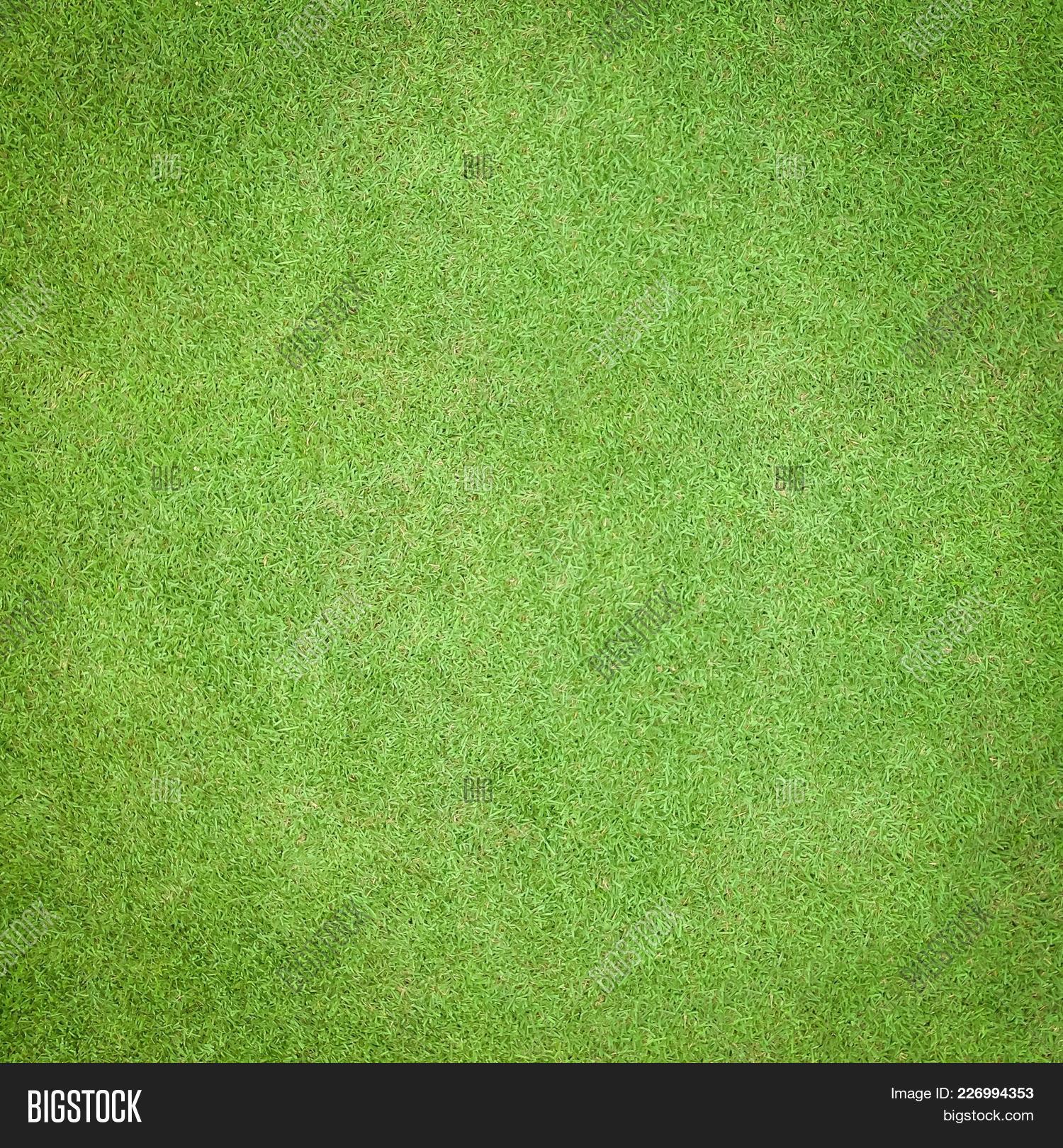 Golf grass top view