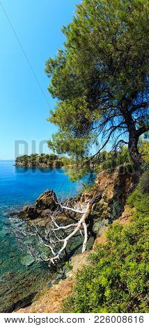 Morning Summer Aegean Sea Rocky Coast Landscape With Pine Trees On Shore, Sithonia (near Ag. Kiriaki