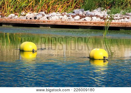 Two Buoys Near A Water Edge On A River.