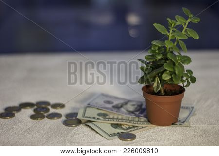 Money Tree. Coins And Paper Money Next To A Pot With A Plant. Euro Coins. Euro Money. Euro Currency.