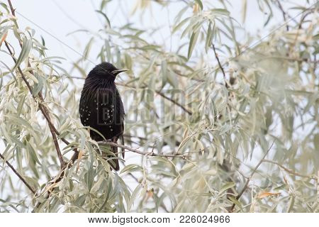 Beautiful Starling Perched On A Tree Branch In The Summer With Stunning Detail