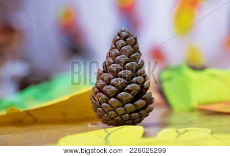 Cone Background Texture . Brown Pine Cone Isolated On White Background . The Pine Cone With Seeds .